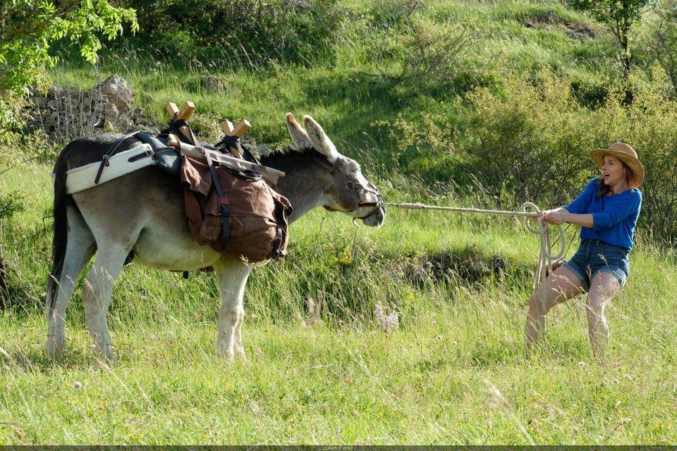 My Donkey, My Lover & I, fotograma 10 de 10