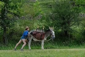 My Donkey, My Lover & I, fotograma 8 de 10