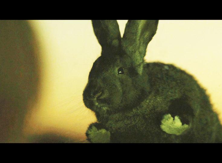 Rabbit Woman, fotograma 2 de 6