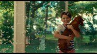 https://www.movienco.co.uk/trailers/wiener-dog-trailer/