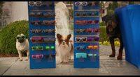https://www.movienco.co.uk/trailers/show-dogs-trailer/