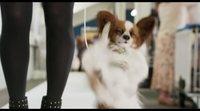 https://www.movienco.co.uk/trailers/show-dogs-tv-spot/