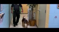 """'A Dog's Way Home' Spot: """"Shelter Pets Day"""""""